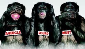 les Bonobos.jpg